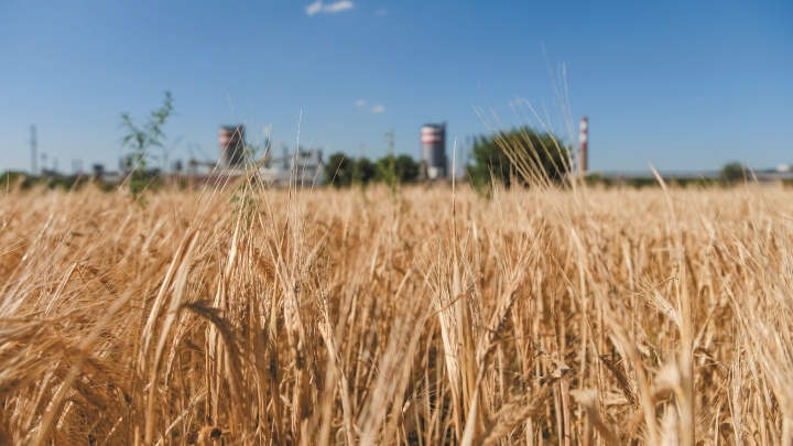 Удобряет землю, кормит скот и очищает нефть: ТОАЗ увеличил поставки карбамида на 20%