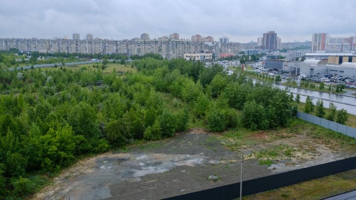 На Северо-Западе Челябинска спилят больше 340 деревьев под строительство аквапарка