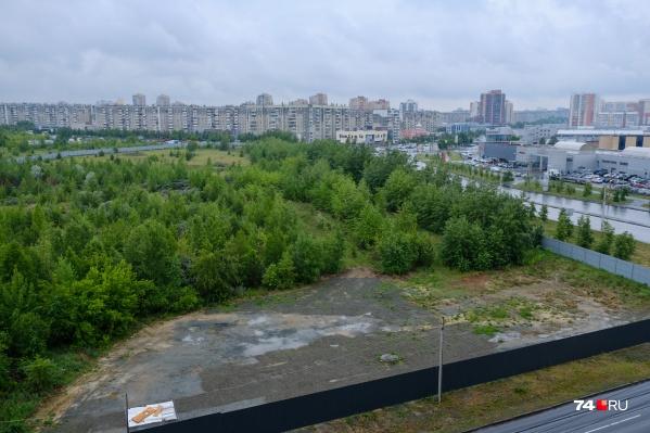 Под спил пойдут сотни деревьев на этом участке