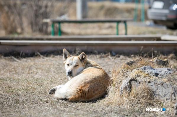 Заявка на бездомных собак передана в «Службу 005»