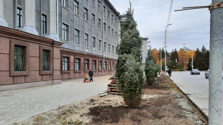 У здания ФСБ высадили 15 новых елей