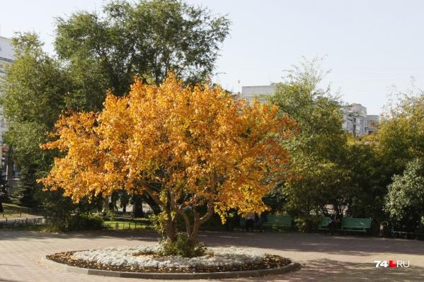 Парк в 38-м микрорайоне хотели назвать«Тайга», но жители решили иначе