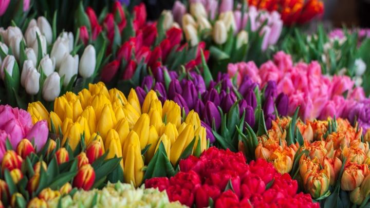 Весенний бум: ростовчане в полтора раза увеличили траты нацветы иконфеты к8Марта
