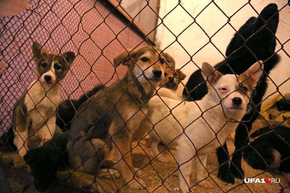 Авторы законопроекта рассчитывают сократить численность безнадзорных животных гуманным способом