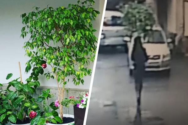 Кража дерева попала на видео