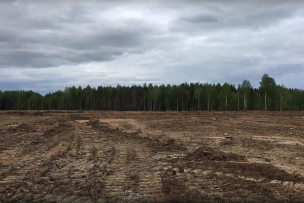 Так сейчас выглядит территория, где в ближайшем будущем появятся сосны