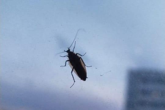 «Летающие тараканы»: уральцы пожаловались на нашествие насекомых