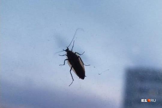 У тараканов есть природные враги, которые серьезно сокращают их численность