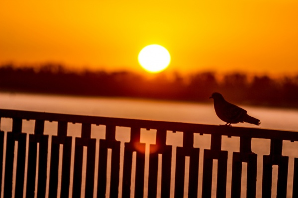Вместе с Олегом по утрам на Набережной гуляют птицы