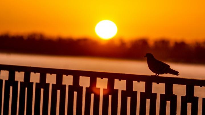 Всё залито ярким солнечным светом: фотограф показал весенний рассвет над Волгой
