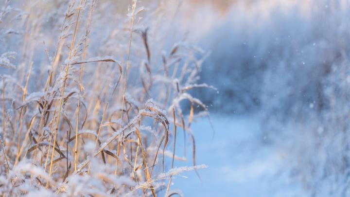 Перед наступлением рабочей недели в Омске потеплеет
