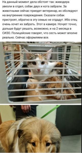 Животные, изъятые у доставленного в полицейский участок мужчины