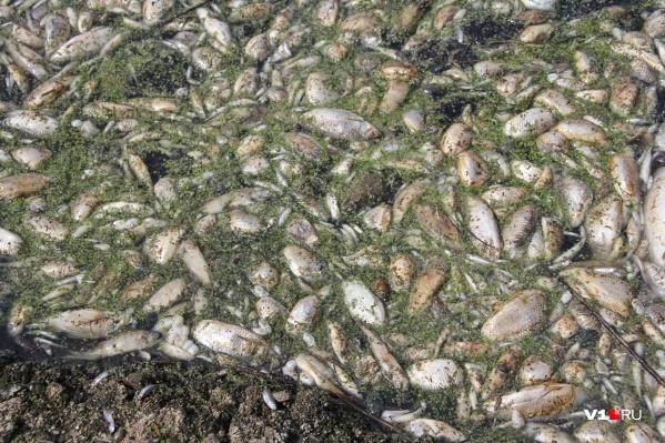 Причины гибели рыбы станут известны после проведения анализов