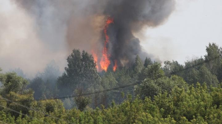 В Самарской области загорелся лес около Нового Буяна
