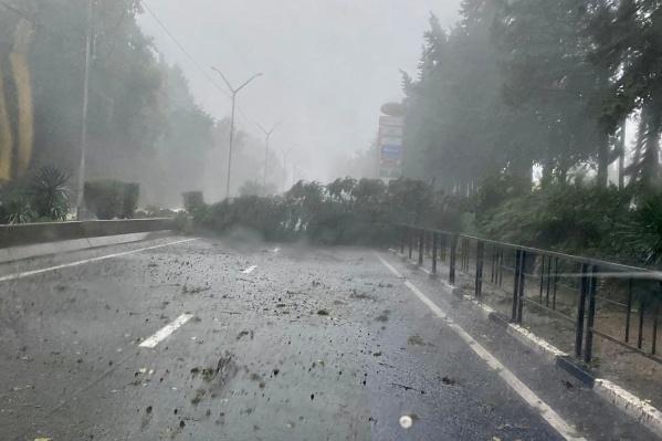 Дерево упало в Адлерском районе