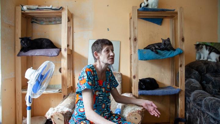 В Тюмени хозяйка приюта ищет хозяев 120 кошкам — она неизлечимо больна раком