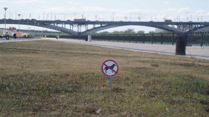 Готовы на одиночный пикет. Нижегородцы возмутились запретом на выгул собак на Нижне-Волжской набережной