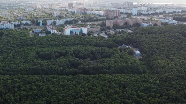 Стало известно, кто хочет застроить Парк 60-летия Советской власти