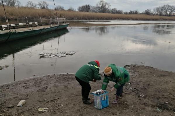 Сотрудники Росприроднадзора уже отобрали пробы воды