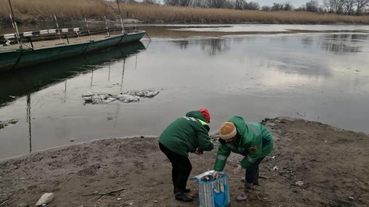«Запах невыносимый». Стоки из канализации Каменска вылились в реку Северский Донец