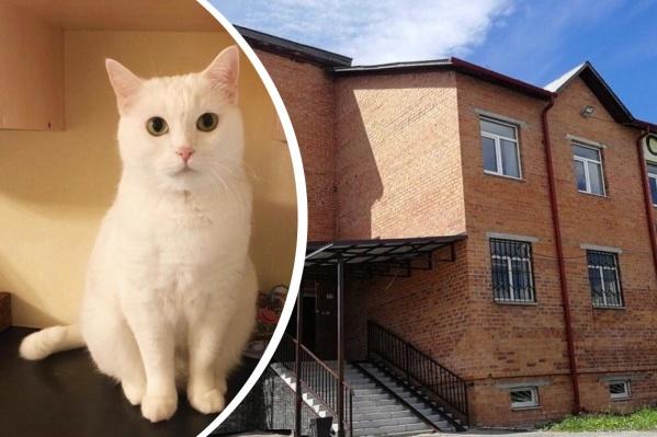 Кошка скончалась через три дня после падения с высоты