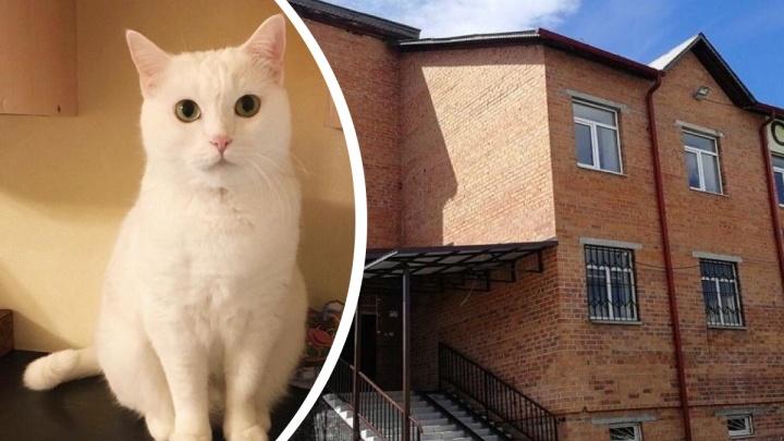 После падения с 10-го этажа погибла кошка. Тюменка обвиняет в смерти животного ветклинику