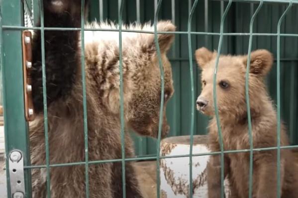 Малыш знакомится с новыми друзьями в Челябинске. Туда его отправили лечиться