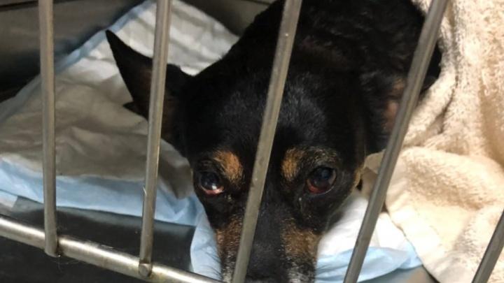 «Избил до полусмерти и выкинул в мусоропровод»: тольяттинец ответит за жестокое обращение с собакой