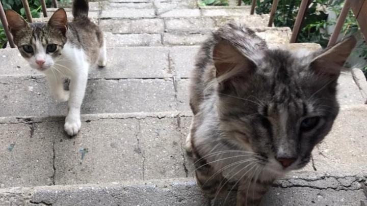В Волгоградской области введен карантин из-за взбесившегося кота