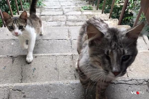 Бешеный кот пришел во двор к одному из жителей хутора