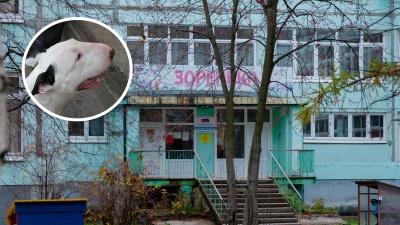 В Архангельске бультерьер покусал детей и их воспитателя: кого и как за это могут наказать