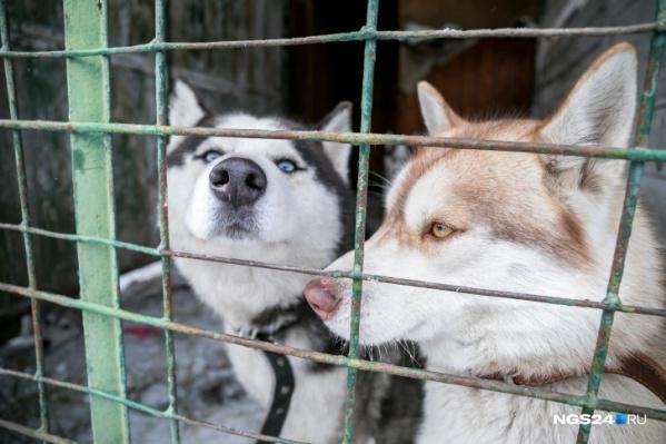 Сейчас в приют берут только собак, которым необходима экстренная помощь