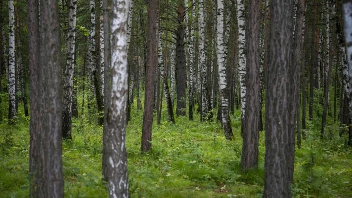 Заблудившаяся 2 дня назад женщина сама вышла из леса