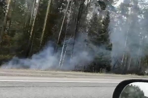 Лес горит вдоль трасс