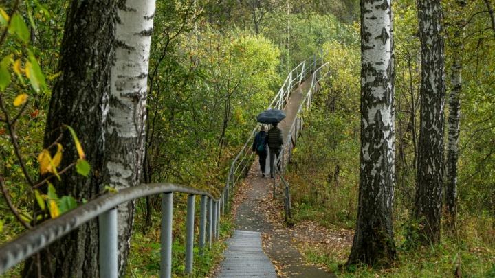 Кружевной мост, пруды с утками и Ботсад — лучшие места речки Зырянки для осенних фотосессий в Новосибирске
