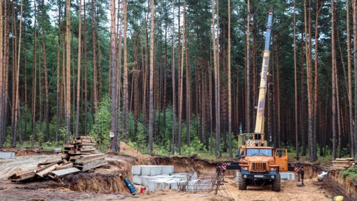 Под Ярославлем вырубили сосновый бор и начали возводить элитные коттеджи