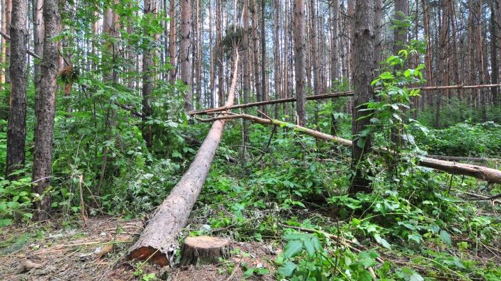 Свердловские волонтеры разыскивают девушку, которая потерялась в лесу