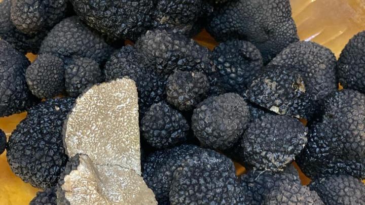 «Черные бриллианты». Сочинка нашла в лесу килограмм трюфелей, самых дорогих грибов в мире