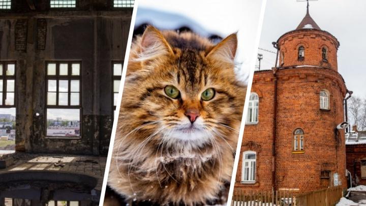 Такой Ярославль: лучшие фото из самых укромных уголков города