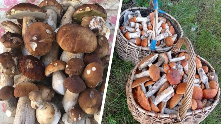 Будем собирать до ноября: ярославский миколог рассказала, когда и какие искать грибы