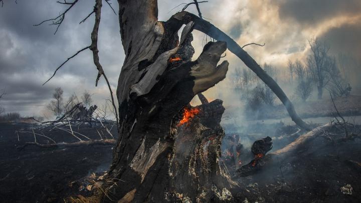 Как горят леса и поля в Тюменской области — 10 страшных кадров