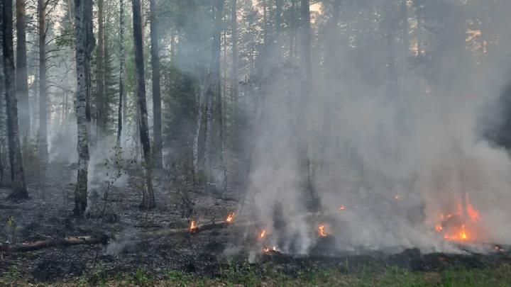Лесной пожар в Миассе подобрался к домам