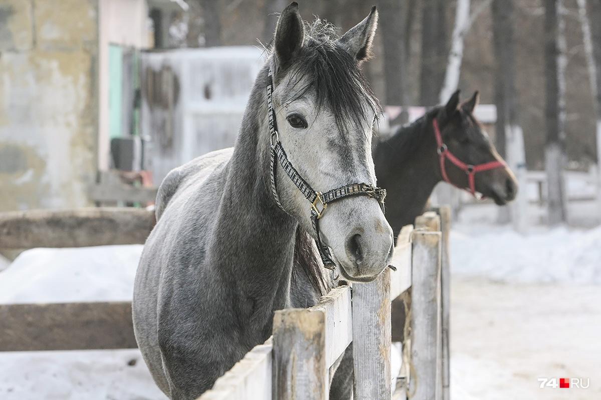 Лошади — это всегда прекрасно, а в День святого Валентина еще и романтично