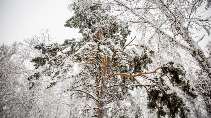 Город снова завалит снегом? Изучаем прогноз погоды на последнюю неделю зимы в Новосибирске