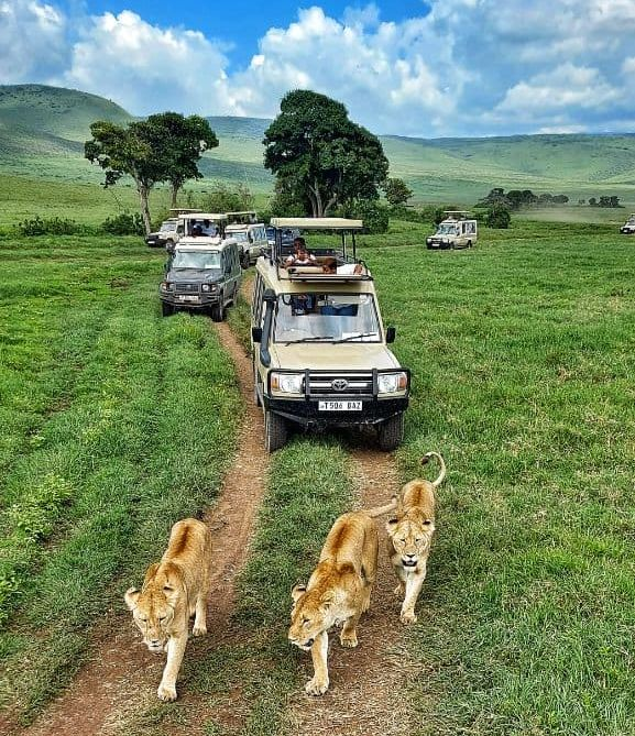Главное развлечение туристов в Африке — смотреть на диких животных в дикой природе