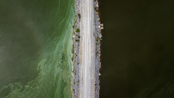 Что попало в воду? У элитного поселка под Новосибирском позеленела река — 2 версии, с чем это связано