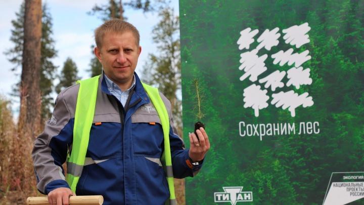 В Холмогорском районе посадят 20 тысяч сосенок: где вырастет новый бор