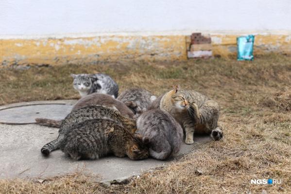 Коты выглядят ухоженными и в целом довольными, но на еду от журналистов НГС набросились с аппетитом