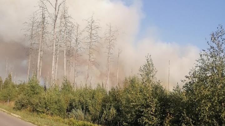 «Просто ад какой-то». Поселок Стеклянный выгорел из-за лесного пожара в Нижегородской области