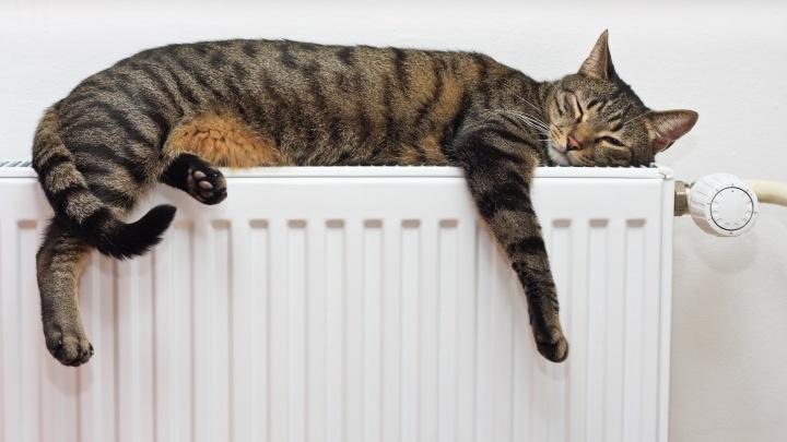 В Ярославле включат отопление
